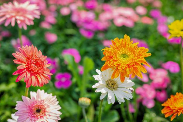 smukke lyserøde blomster